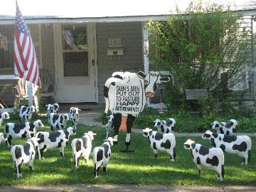 3D Cow Display